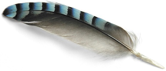 Jay Feather